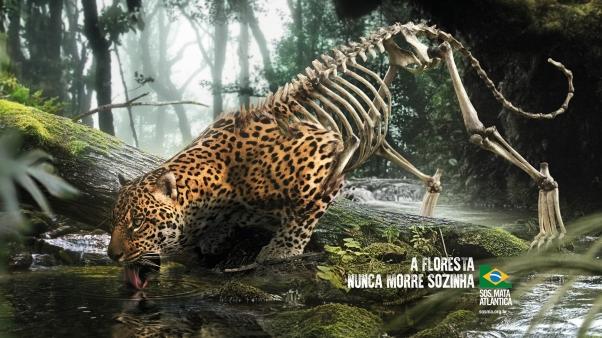 SOS Mata Atlântica_A Floresta Nunca Morre Sozinha_Onça